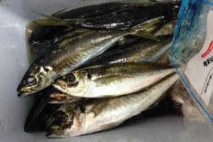 久里浜 ムツ六釣船店 LTウィリー五目船で大漁!!
